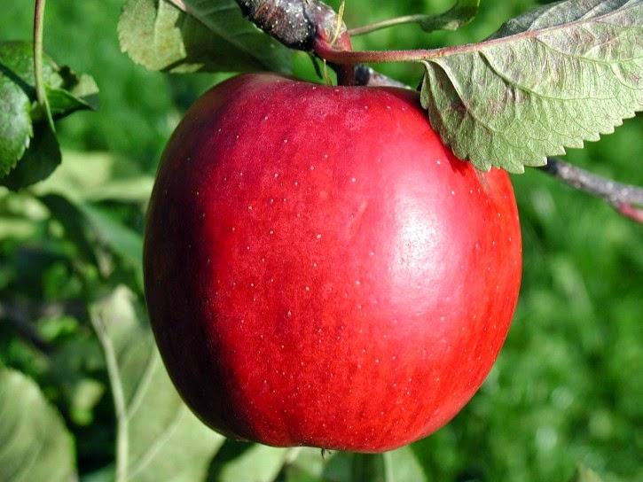 buah buahan untuk wanita hamil