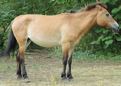 Horse breeding insight biblical created kinds DNA