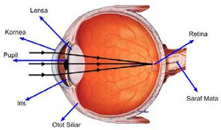 bagian - bagian mata