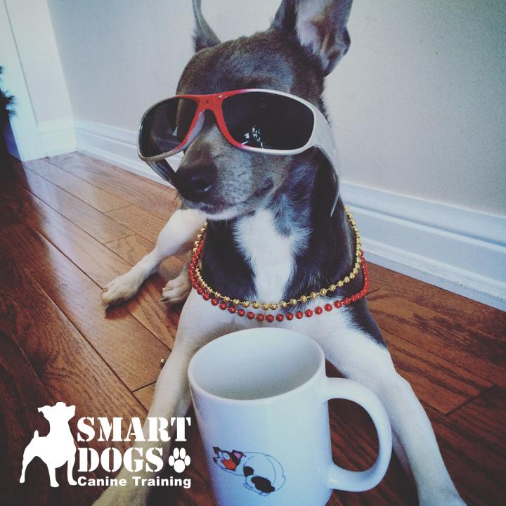 Dog Training Acton Ontario