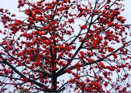 Bunga Mukmin / Ratu Pari ratu selatan
