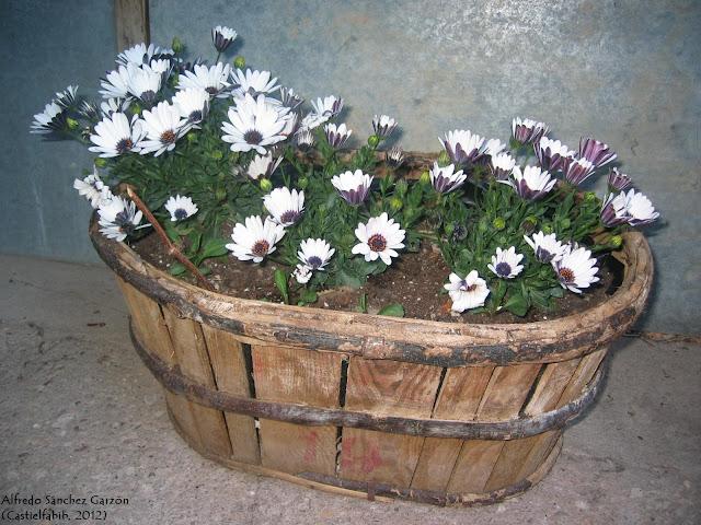 canasta-flores-castielfabib-valencia