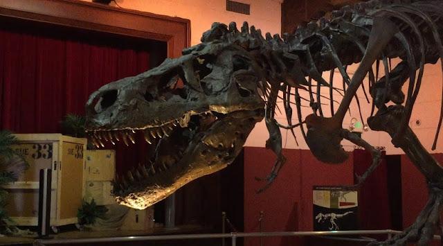 Sobre o Museu da História Natural em Santa Bárbara