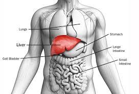 7 Gejala Penyakit Liver Dan Pengobatannya