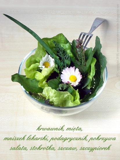 sałatka z łąki z jadalnych roślin łąkowych