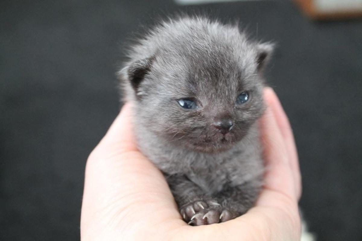 cute kitten bruce