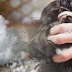 Rub Epsom salt in your hair and THIS could happen – amazing!