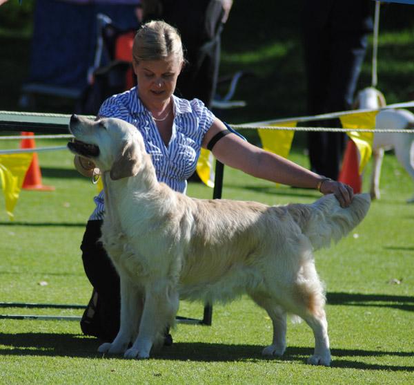 vinna champion hund om inavelsgrad