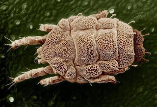 Ev tozu akarı alerjisi, sindirim sistemi hastalıklarında etkili olabilir