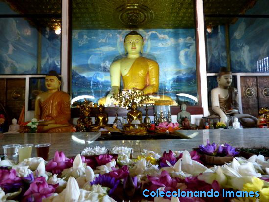 Sri Maha Bodhi, Anuradhapura, Sri Lanka