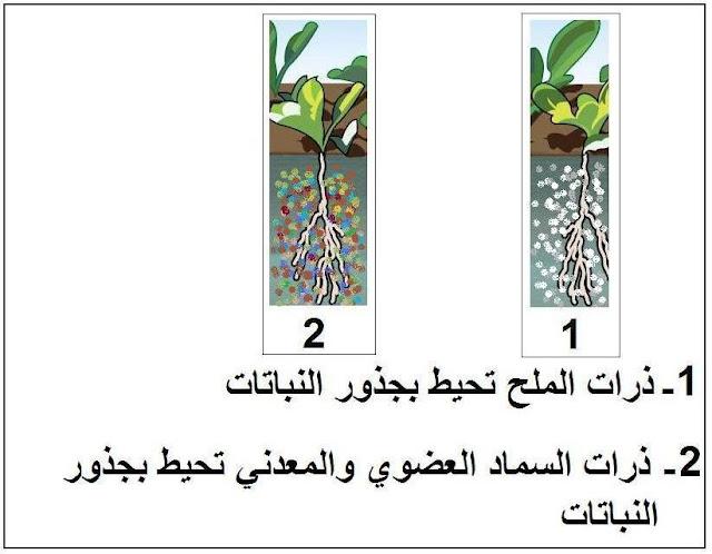 علاج ملوحة التربة الزراعية %D8%B9%D9%84%D8%A7%D