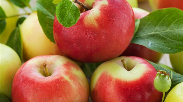 178 Tonnen Äpfel mit makedonische Dokumente in Russland vernichtet