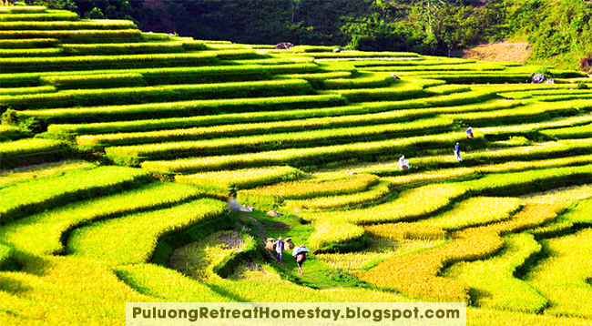 Pu Luong Nature Reserve Trekking Guide for You