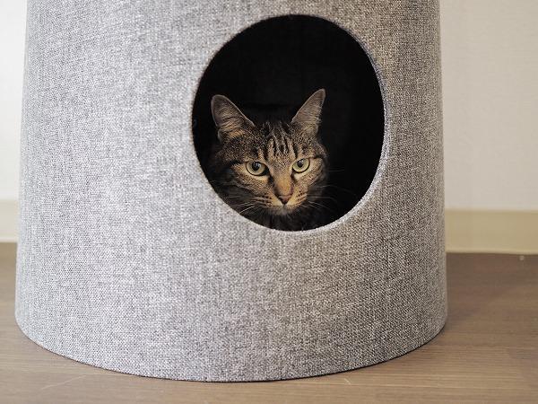 セットカーサの下段に篭っているキジトラ猫