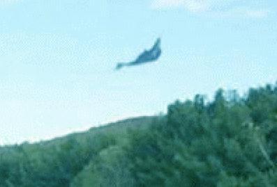 30flyingpterosaurpapuanewguinea - LOS PTERODÁCTILOS AÚN SIGUEN VIVOS
