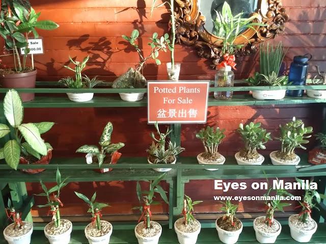 Aloha Hotel Manila Plants