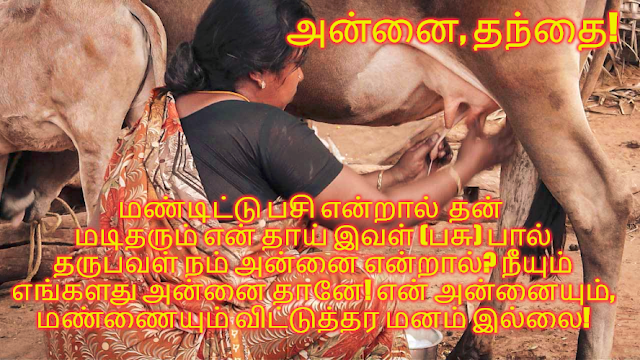 about jallikattu in tamil