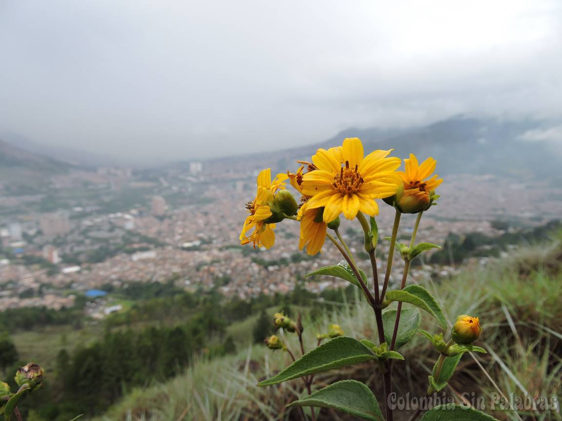 flores y la ciudad de bello en el fondo