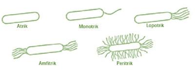alat gerak archaebacteria dan eubacteria