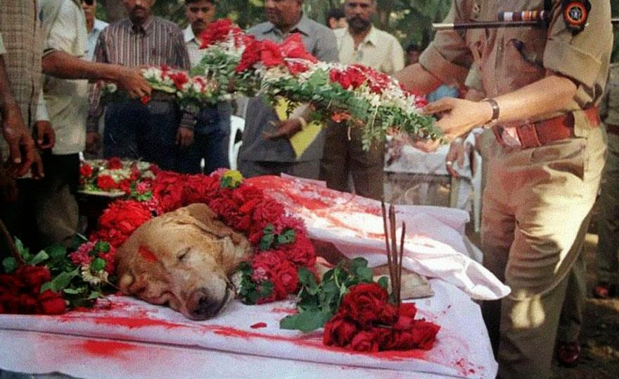 30 of the most powerful images ever - Zanjeer the dog saved thousands of lives during Mumbai serial blasts in March 1993 by detecting more than 3,329 kgs of the explosive RDX, 600 detonators, 249 hand grenades and 6406 rounds of live ammunition. He was buried with full honors in 2000
