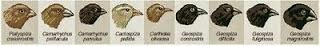 evolusi burung Finch