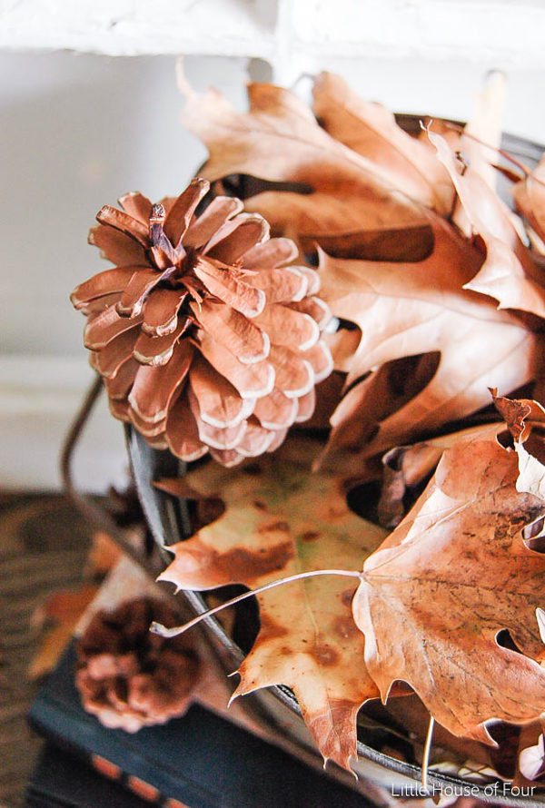 fall leaves and pinecone
