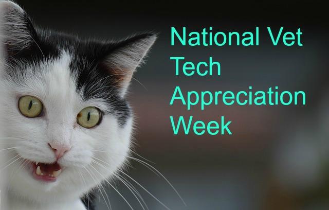 Fur Everywhere Vet Tech Appreciation Week