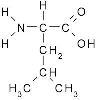 amino acid (leucine)