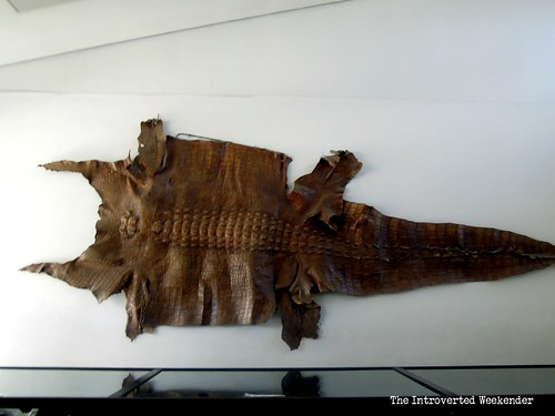 Puerto Princesa Travel Guide: preserved skin of a giant crocodile