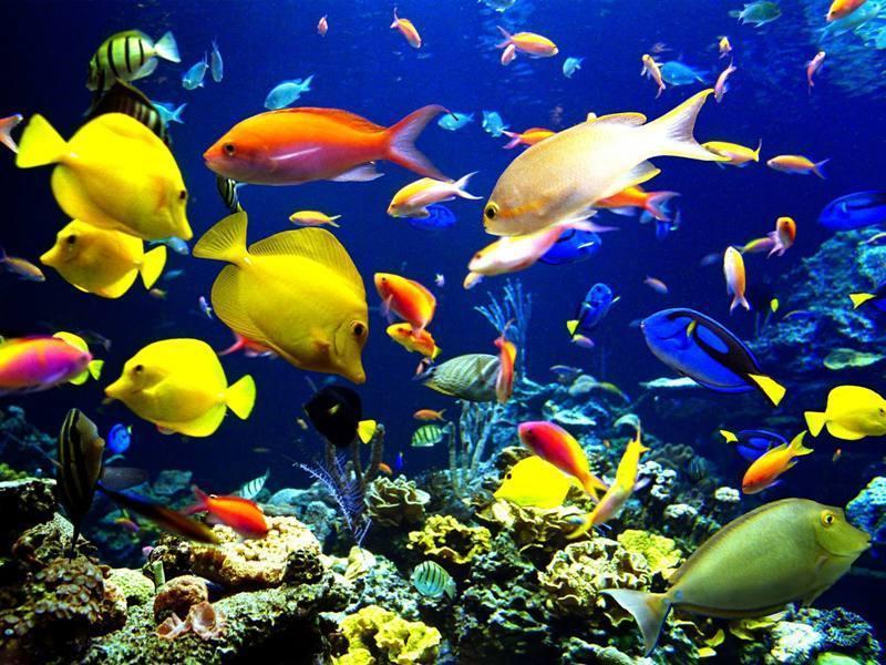 Ocean Biome Animals