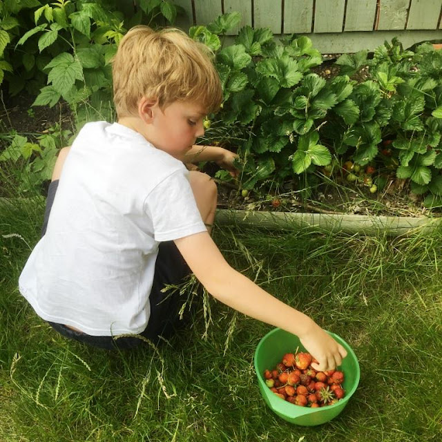 strawberry recipes, rubiks cubes, family days out, vegetarian food, sunshine in june