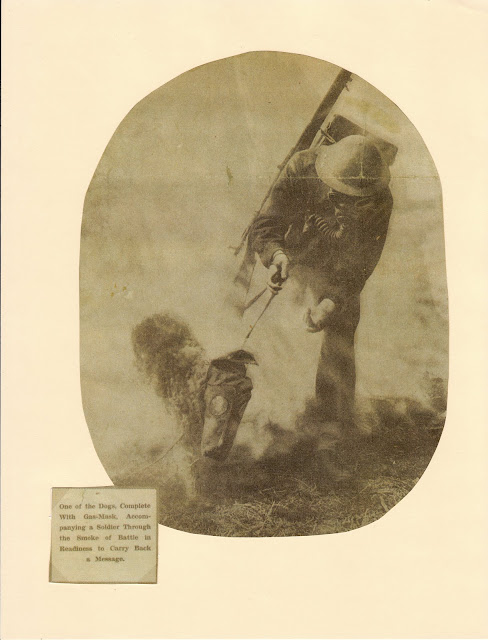 Training England's Dogs of War Airedales Colonel Richardson
