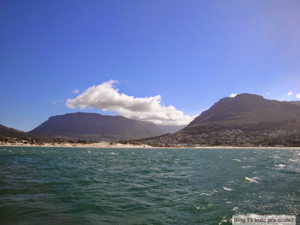 passeio para ver focas em Hout Bay