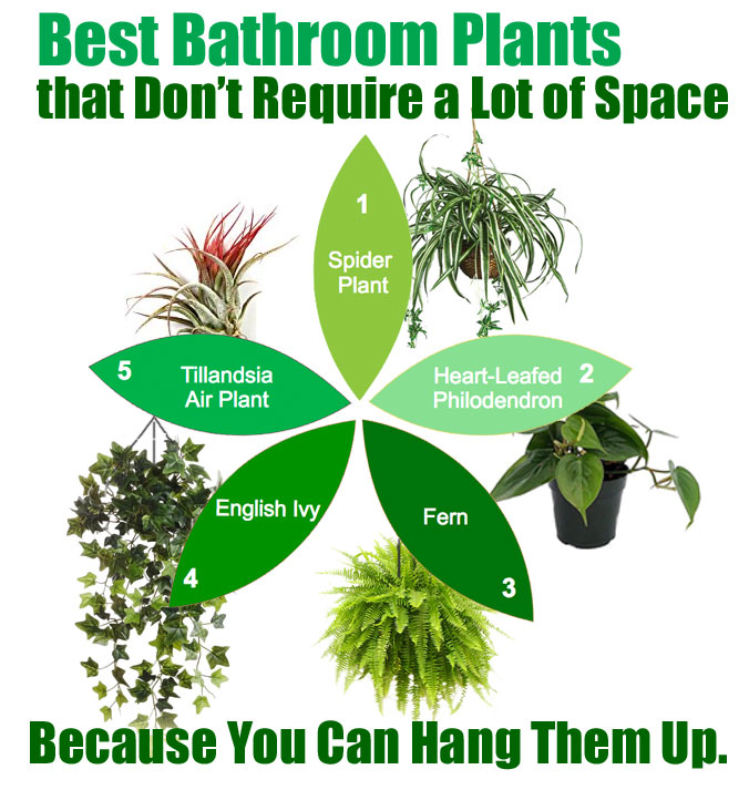Pokloni mi cvet biljke koje uspevaju u kupatilu for Best bathrooms 4 u
