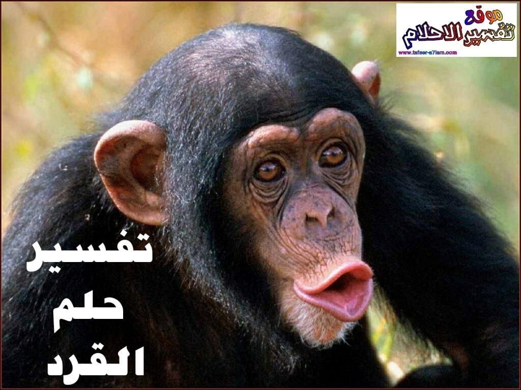 تفسير حلم رؤية القرد في المنام لابن سيرين