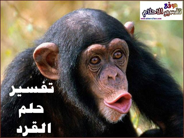 تفسيرحلم القرد يلاحقني
