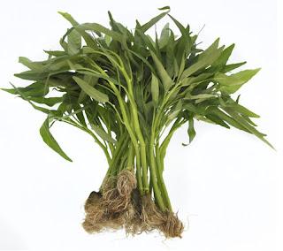 tanaman-hidroponik-kangkung