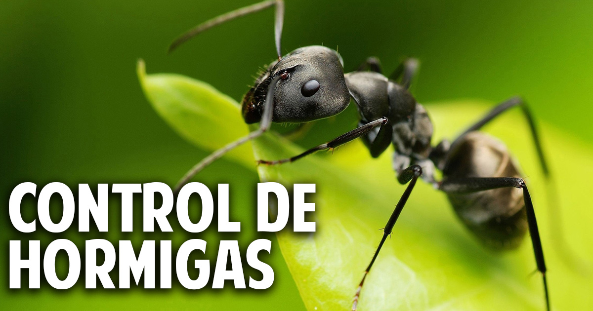6 consejos para eliminar las hormigas del jardin cosas for Como eliminar plaga de hormigas