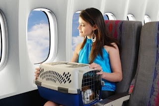Air Travel and Pets