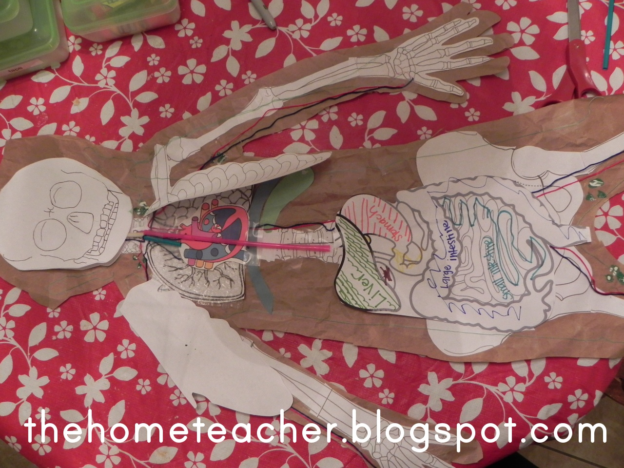 The Home Teacher Human Body Digestive System