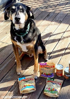 Teutul can't wait for an Evanger's Jerky treat!  - #Evangers #DogFood #DogTreats #LapdogCreations ©LapdogCreations