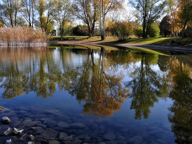 ảnh hàng cây mùa thu soi dưới mặt hồ