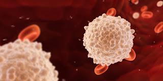 Cara Mengobati Kelebihan Sel Darah Putih
