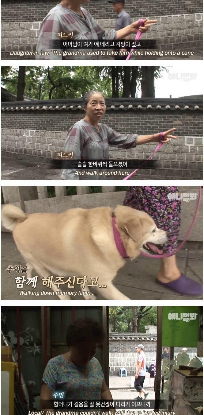 주인을 떠나보낸 슬픔으로 비만이 된 개