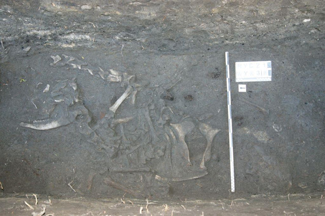 Evidence of pagan funerary rituals found at medieval Polish castle