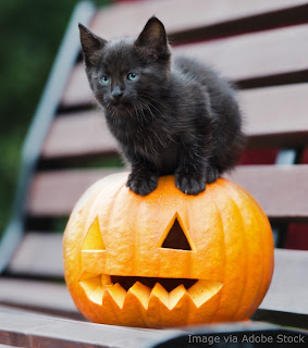 Black kitten on a jack-o'lantern, #kitten #jackolantern #blackcat #Halloween