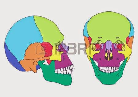 Morfofisiologia Humana 2014