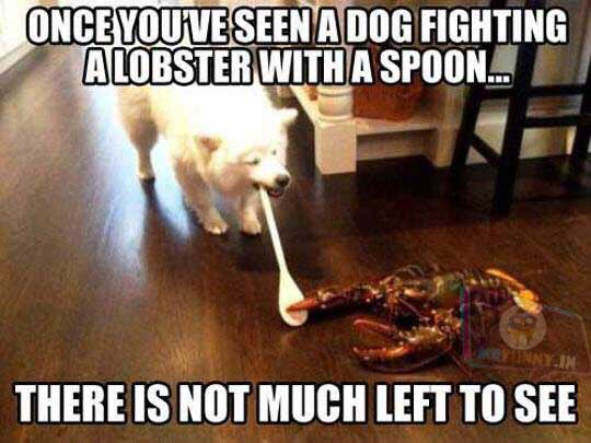 Dogs will protect you from anything, even a Lobster