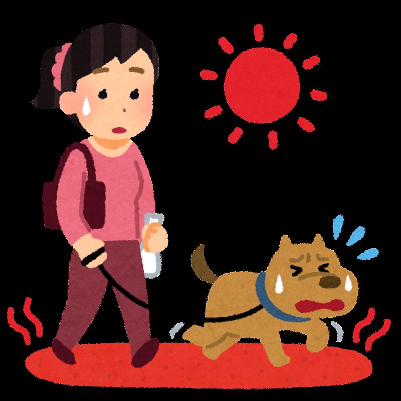 アスファルトが暑くて辛い犬