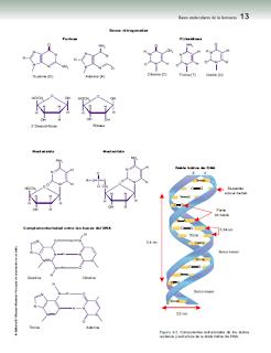 Libros Medicina Genetica Clinica Victoria Del Castillo PDF